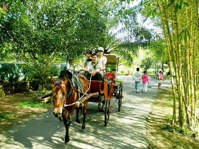 Đi xe ngựa dạo quanh khắp xóm