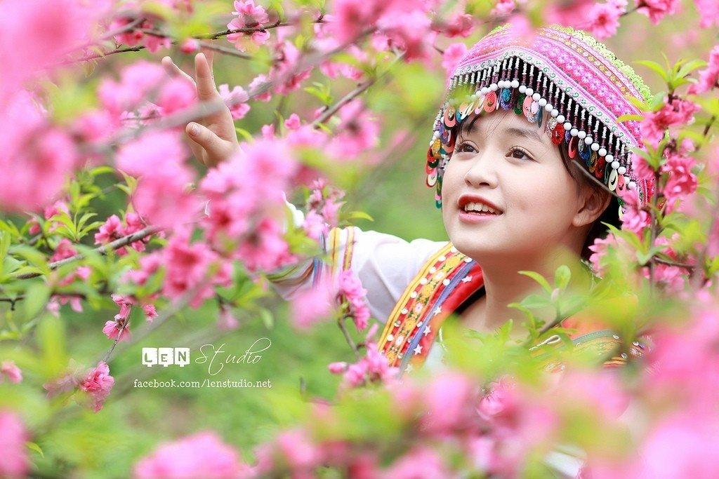 Có những mùa hoa ở Mộc Châu khiến lòng người ngẩn ngơ quên lối