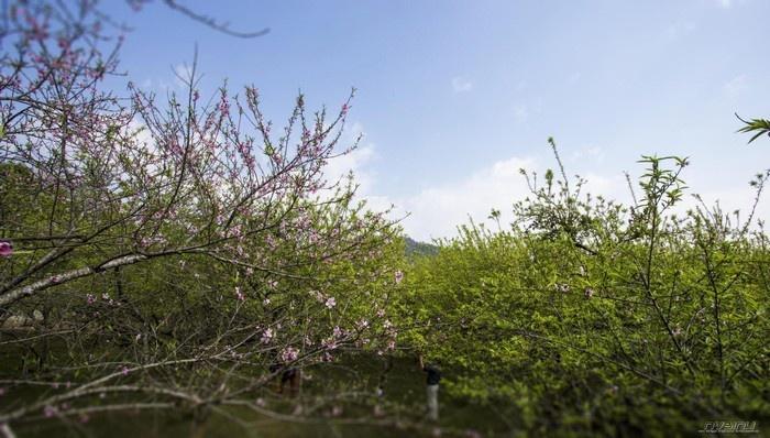 Mộc Châu - Khiến lòng người ngẩn ngơ chờ mùa xuân đến
