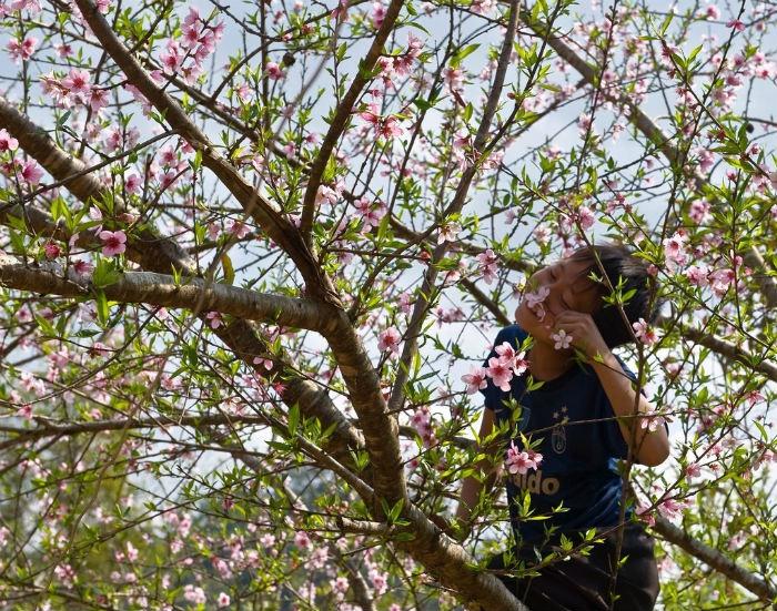 Mộc Châu - Khi sắc hoa vương trên đôi mi của đứa trẻ thơ ngây