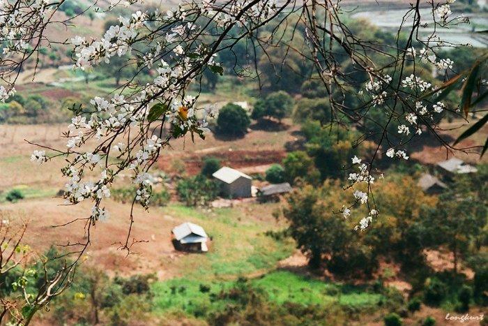 Phải yêu lắm những mùa hoa Mộc Châu người nhiếp ảnh mới cho ra đời những góc chụp tình đến vậy