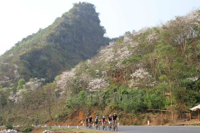 Hoa ban nở trắng hai bên đường quốc lộ 6 - Mộc Châu