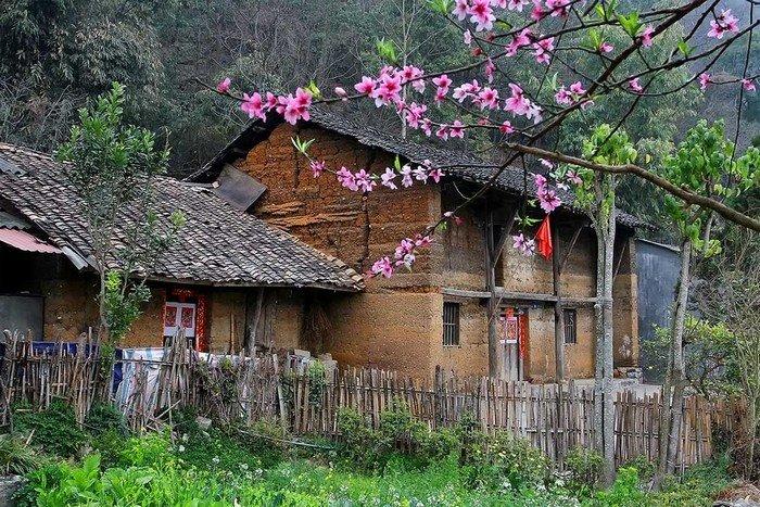 Đào khoe sắc bên căn nhà trình tường vách đất Hà Giang