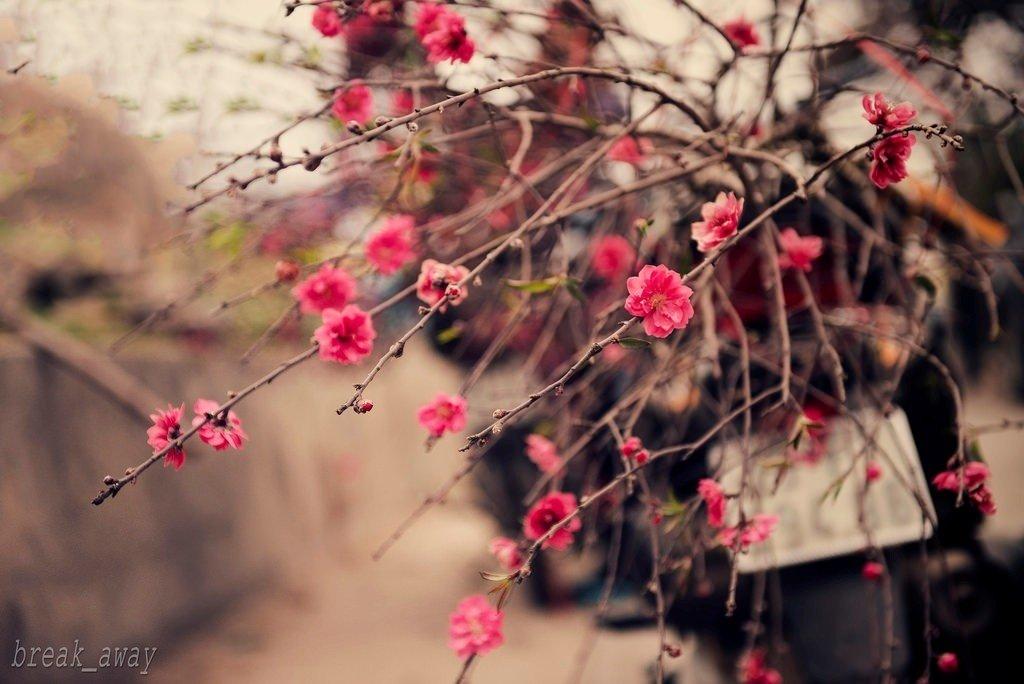 Những chiếc xe hoa chở niềm vui mùa mới len lỏi trên những con đường Hà Nội