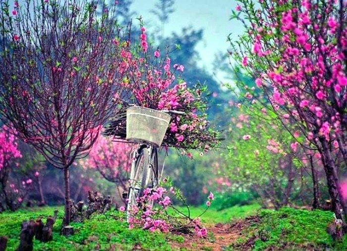 Để mùa xuân Hà Nội thêm đủ đầy phong vị