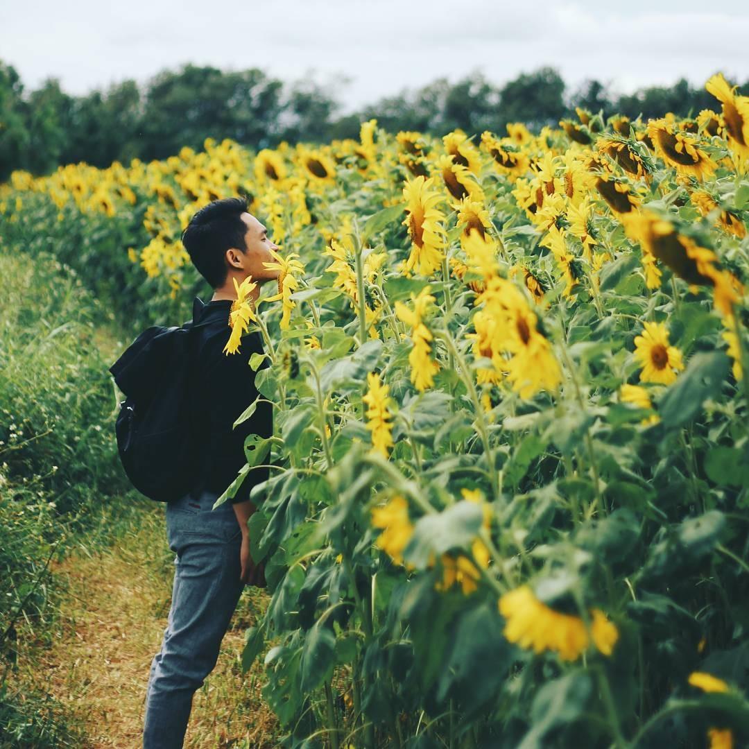 Đứng giữa đồi hoa mặt trời