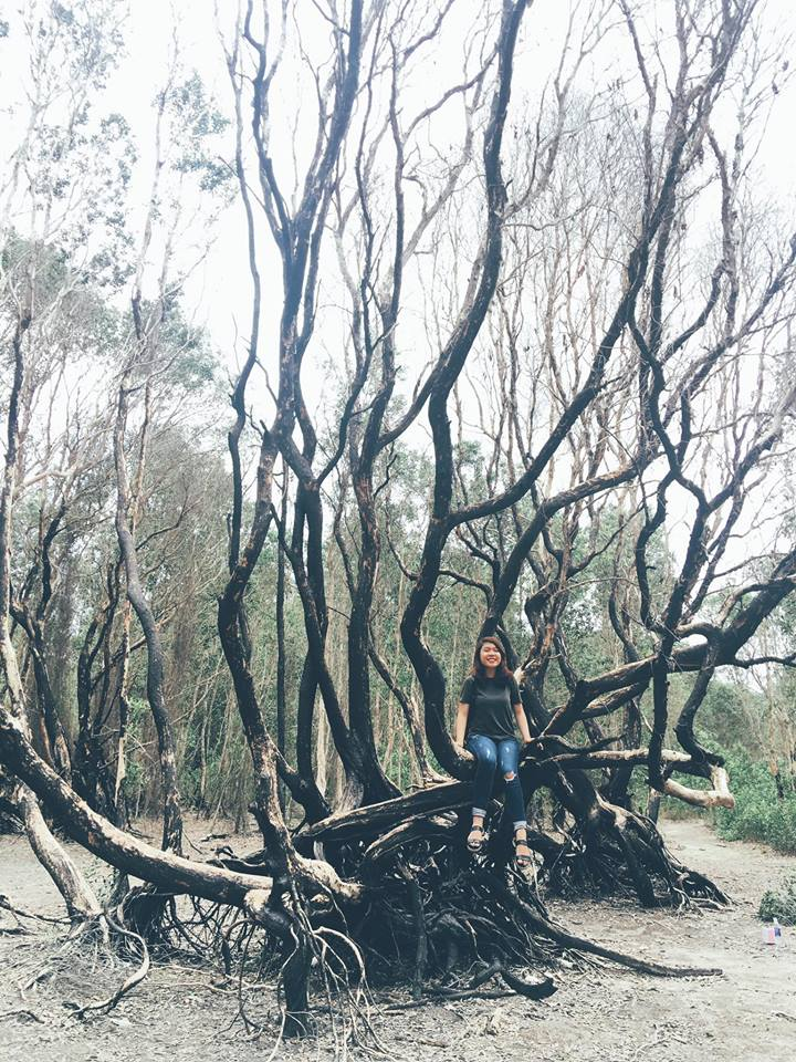 Những gốc cây cổ thụ đầy ma mị - Ảnh: Hà Thục Tinh