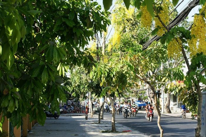 Các tuyến đường ở quận 8 và Tân Phú có khá nhiều hoa bò cạp