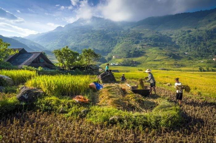 Sapa - Mong một mùa mới bội thu
