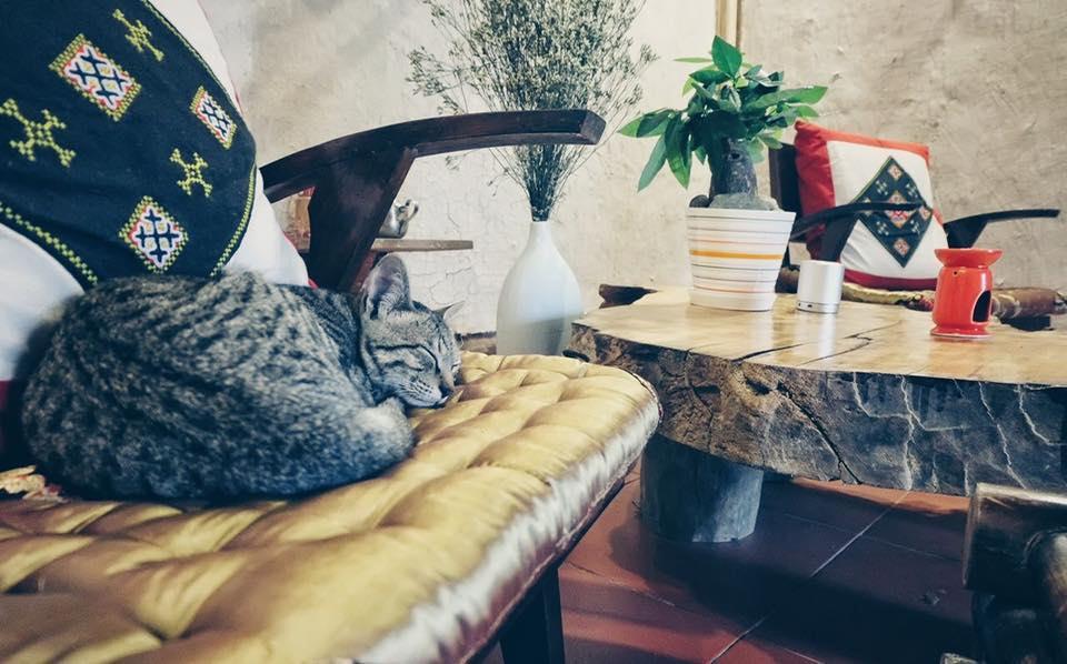 Để được lười nhác như chú mèo mùa đông - Ảnh: Check in VietNam
