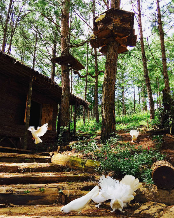 Khu nhà gỗ với những chú bồ câu cực dễ thương - Ảnh: @helennguyenstudio