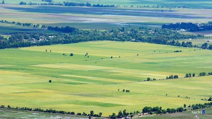 Ngẩn ngơ ngắm nhìn những đồng lúa Tà Pạ bạt ngàn, mênh mông như trải thảm khổng lồ