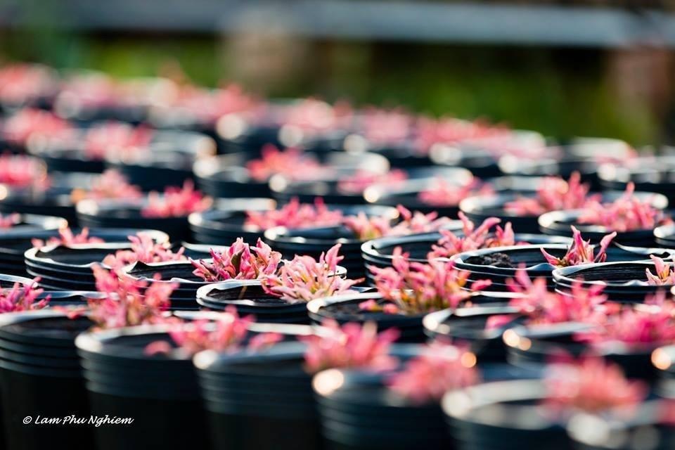 Sắc màu ngọt ngào của mùa xuân Tân Quy Đông