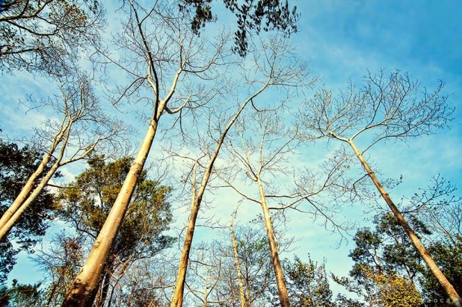 Những hàng cây trơ trọi khẳng khiu mùa lá rụng Đray Sáp