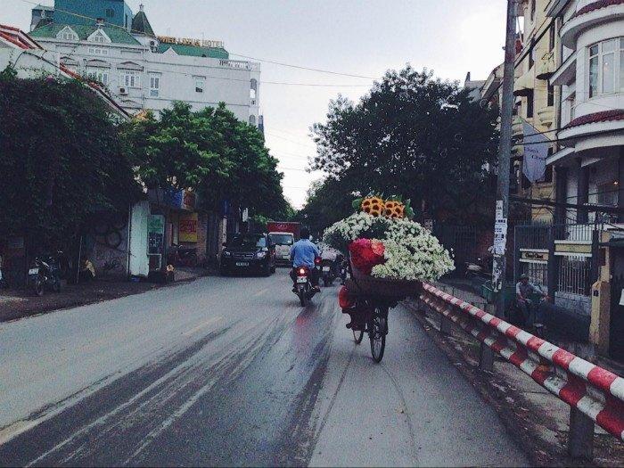 Gánh hoa cúc họa mi báo hiệu mùa đông Hà Nội