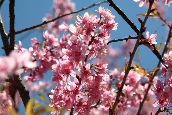 Sắc hoa Đà Lạt mang vẻ dịu dàng, e ấp