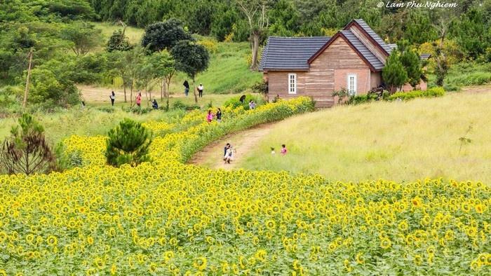 Cánh đồng hoa hướng dương được giới trẻ tìm đến để có những bức ảnh đẹp