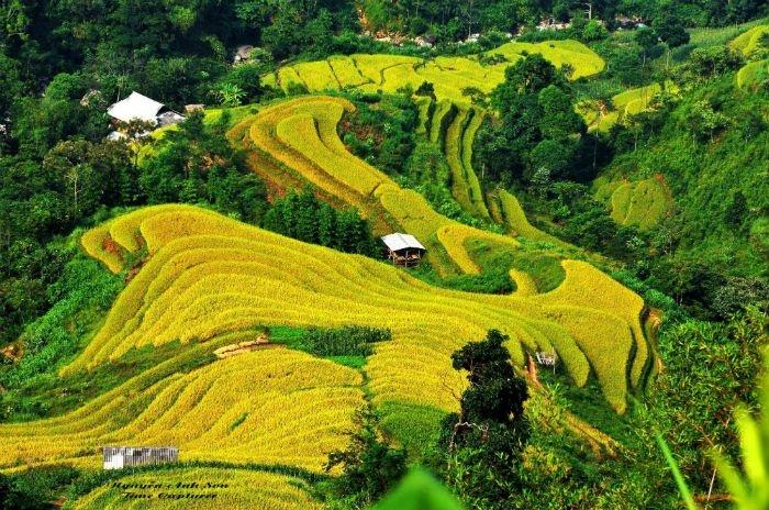 Trong sắc vàng ươm của ruộng bậc thang Hà Giang mùa gặt