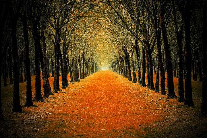 Đâu cần đi tới những miền xa xôi để ngắm những khu vườn lá vàng lá đỏ