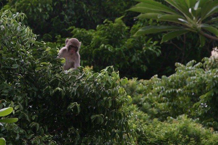 Những chú khỉ nghịch ngợm leo trèo