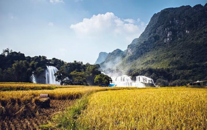 Màu lúa óng vàng bên thác nước Bản Giốc đẹp mơ màng