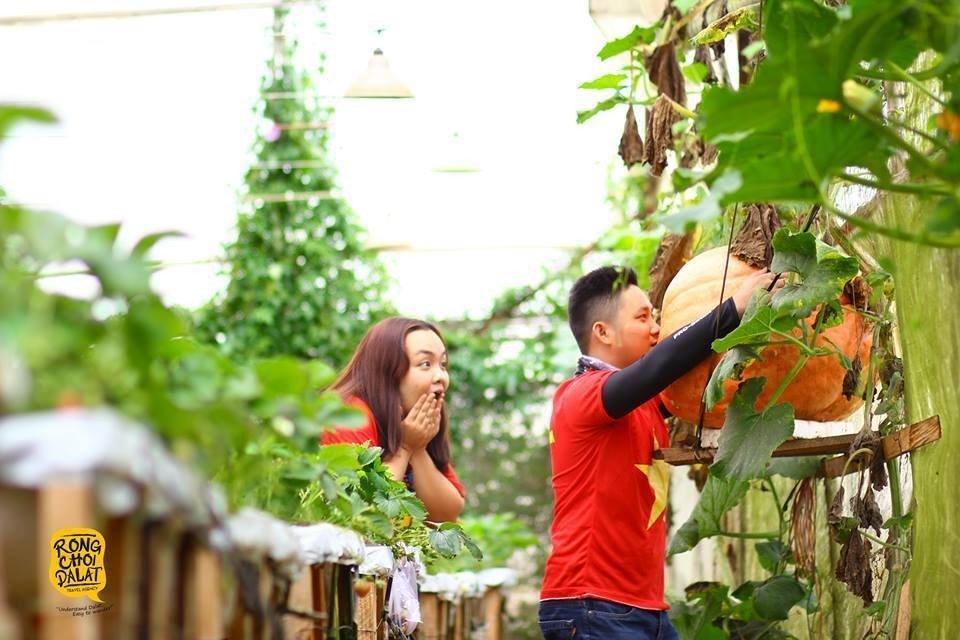 Vườn bí đỏ khổng lồ ở Đà Lạt