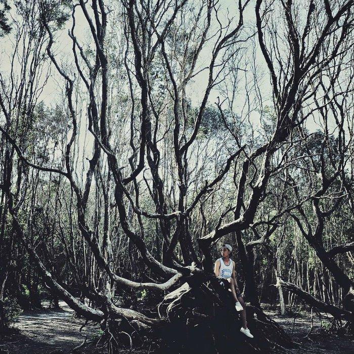 Để người ta say sưa khám phá những điều huyền diệu ẩn sau những khu rừng kì bí - Ảnh: Huamanvn