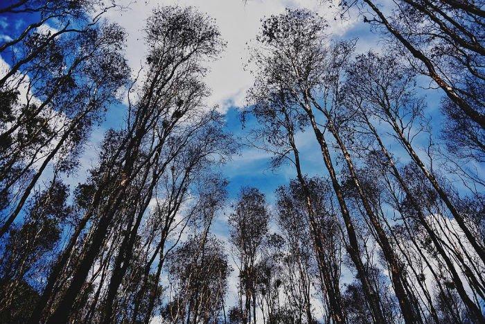 Một khu rừng nguyên sinh duy nhất còn tương đối vẹn nguyên ở Việt Nam - Ảnh: Wuochoang