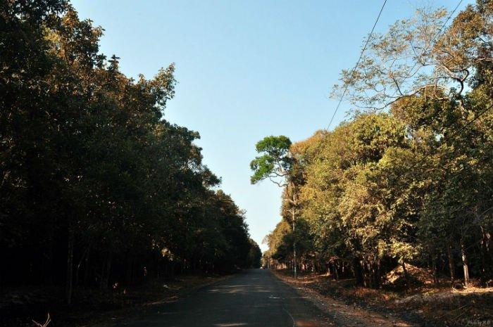 Nơi đưa người lữ khách lạc trong những mảng xanh của các loài thực vật - Ảnh: Dung Anh