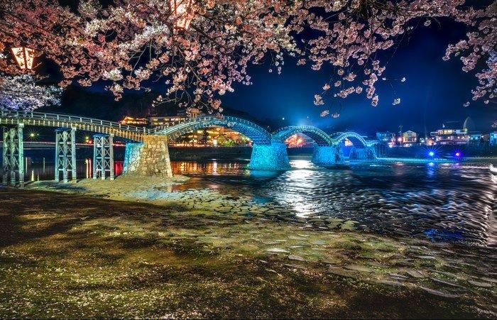 Đường hoa anh đào về đêm bên cầu Kintai Kyo