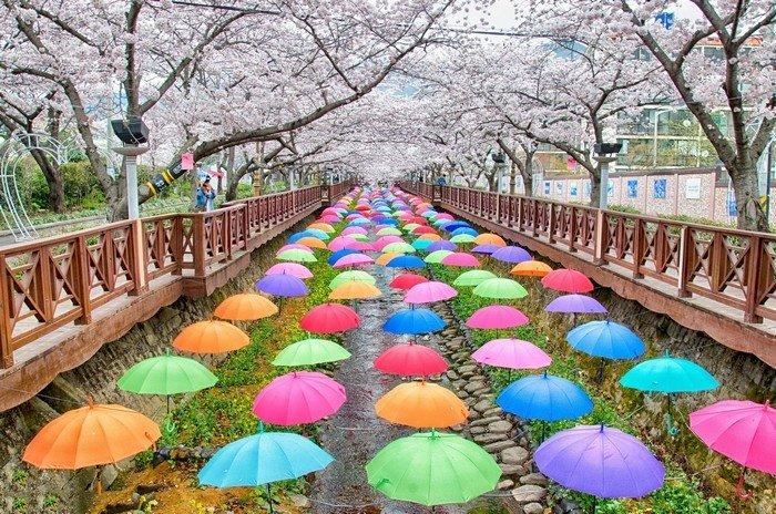 Anh đào ngập tràn màu sắc với những chiếc dù lơ lửng