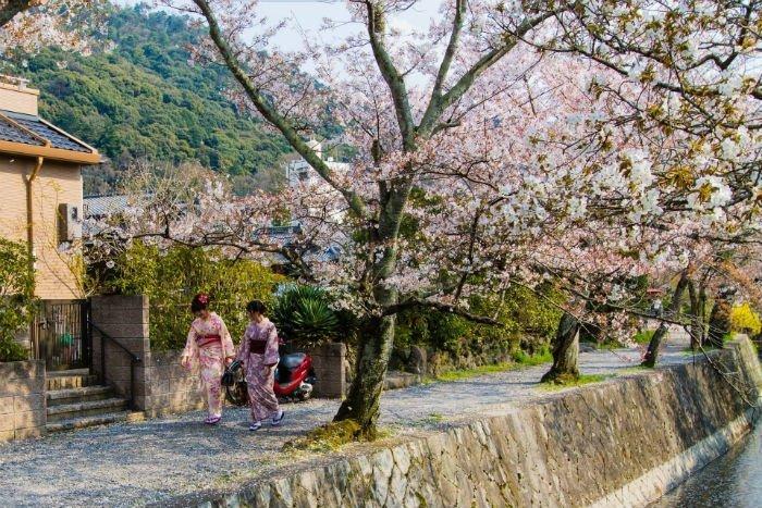 Con đường triết học Tokyo với những hàng đào rạng ngời