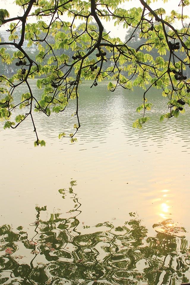 Khung cảnh thơ mộng bên cây mõ góc hồ Gươm - trái tim đất kinh kỳ Hà Nội