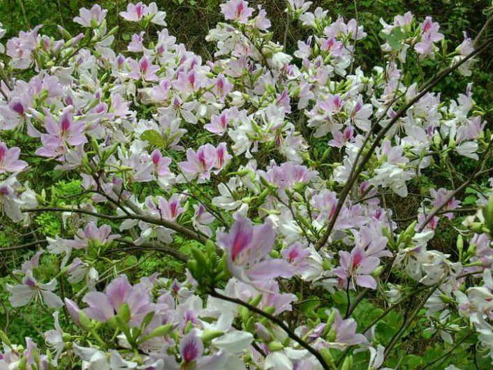 du lịch cùng mùa hoa tháng 4
