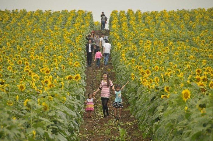 Nhiều gia đình đưa cả con nhỏ đến đây để ngắm hoa