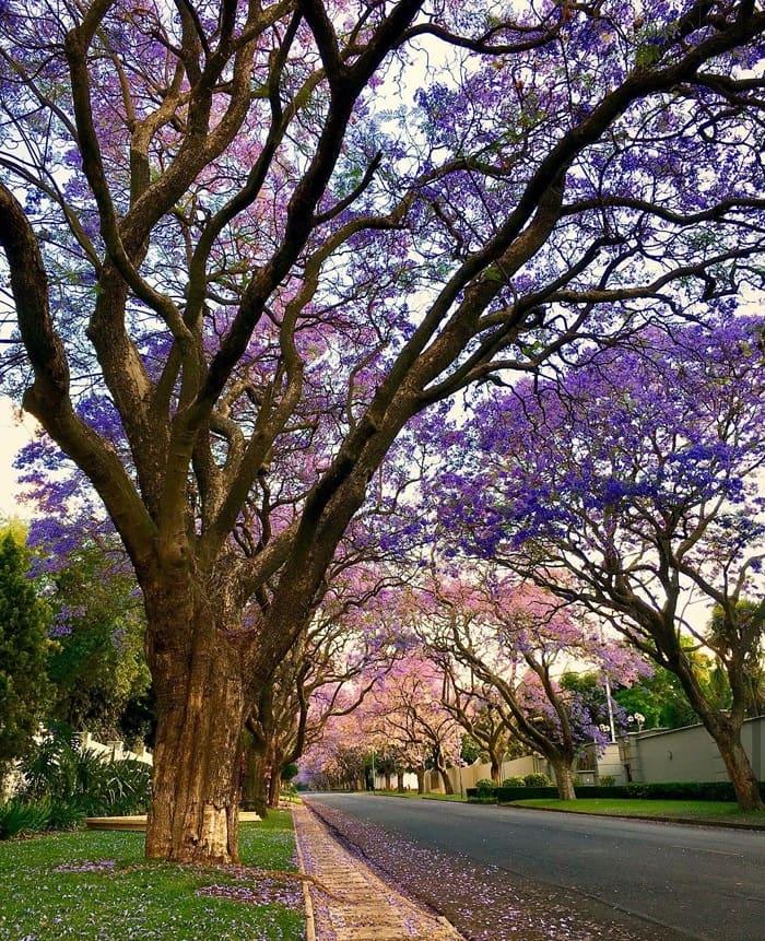 72h khám phá thành phố Johannesburg Nam Phi