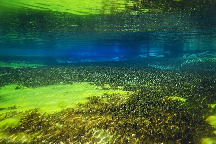 Vẻ đẹp cuốn hút của hồ tự nhiên Blue Lake New Zealand