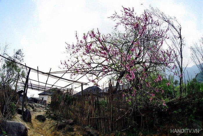 Vẻ đẹp dịu dàng của mùa xuân ở rẻo cao Tây Bắc