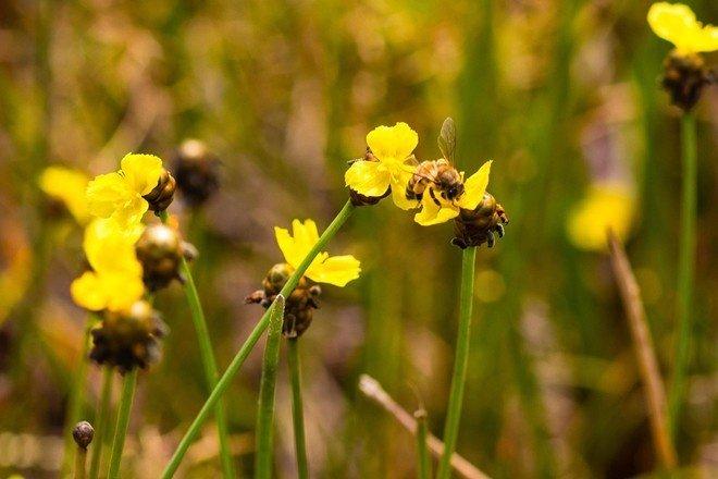 Mùa hoa thu hút nhiều loài bướm ong về đây tụ hội
