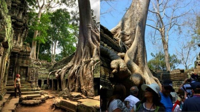 Siem Riep, Campuchia
