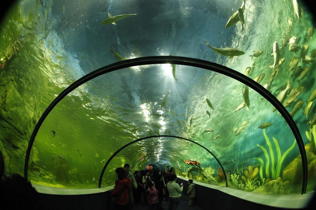 Khám phá thủy cung lớn nhất Việt Nam ở Times City