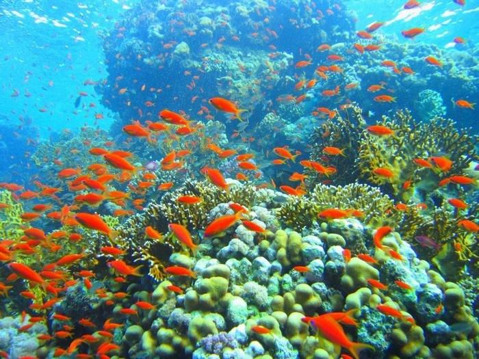 Sinh vật biển quanh Cù Lao Chàm
