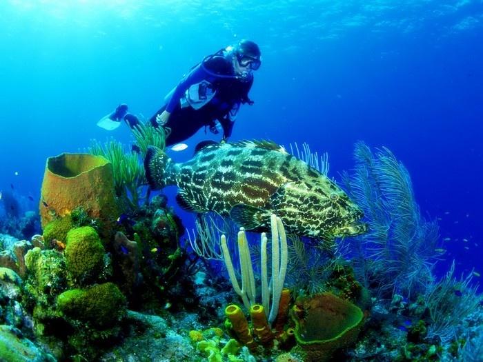 Lặn biển khám phá thủy cung