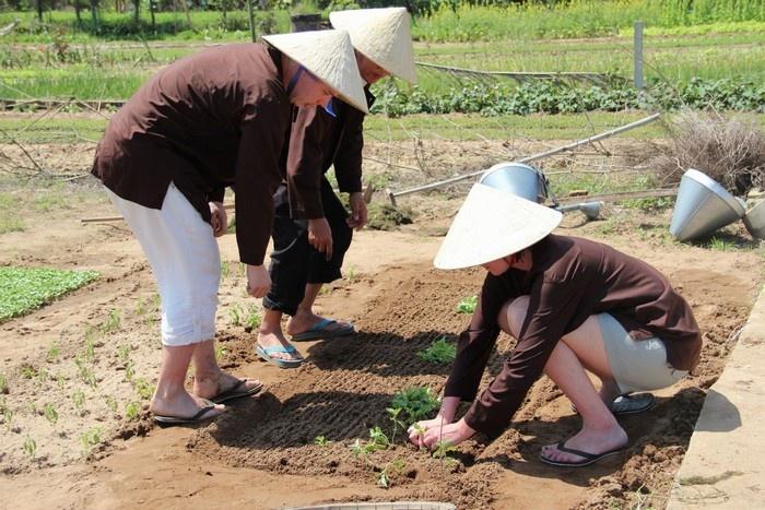 Du khách trở thành nông dân ở làng rau Trà Quế