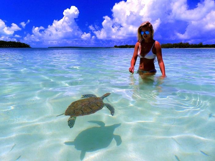 Trại rùa biển Sanctuary