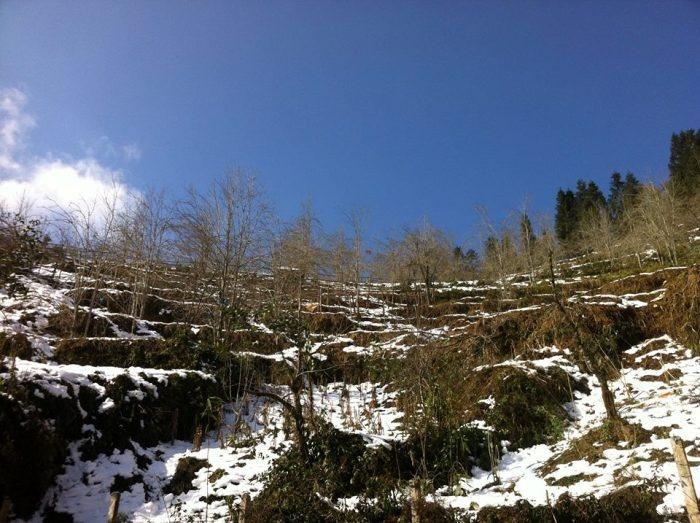 Y Tý mùa tuyết