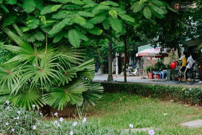 Những hàng cây xanh ngắt bao trùm và phủ kín từng góc phố.