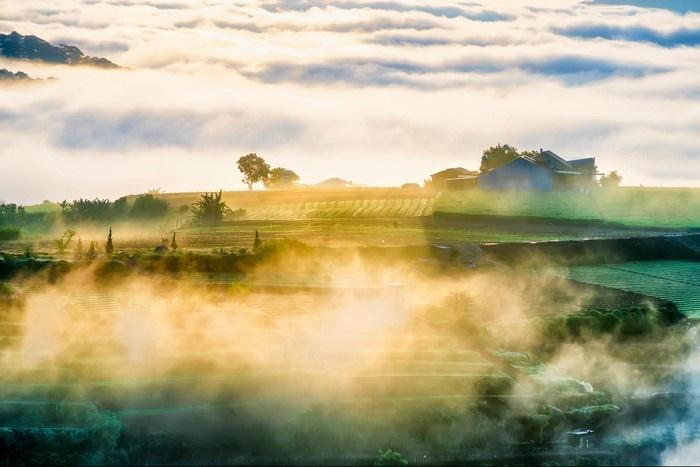 Ban mai đầy mê hoặc với sương sớm ở làng chè Cầu Đất