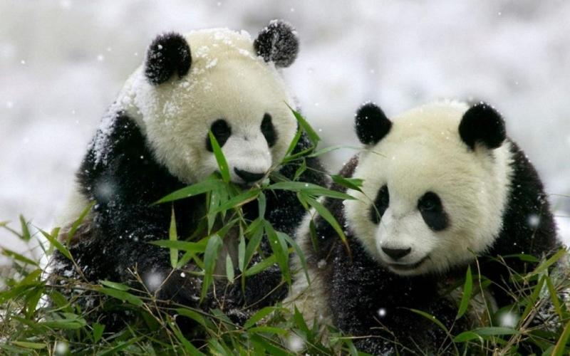 2. Mình cùng nhau vượt qua bão tuyết nhé.