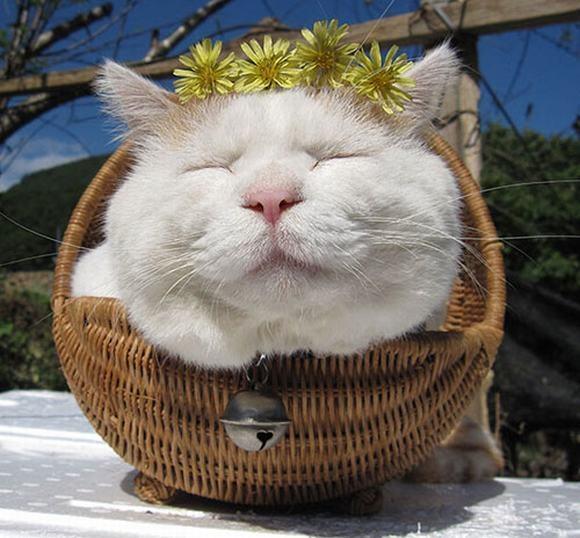 4. Hoa và mèo, em chọn ai?